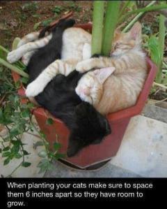 PlantingCats