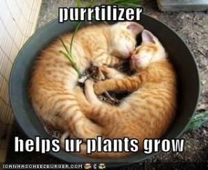 Purrtilizer