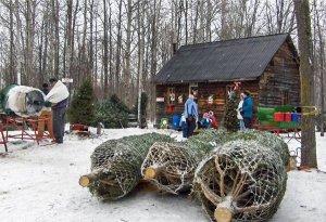 Christmas-Tree-Farm-eb323a44