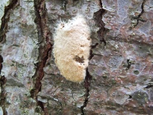9f3d1-moth_eggs_2_freetiiupix-com
