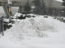 Owwww! How can we design parking lots better to reduce impacts of snow removal activities on our precious plants?