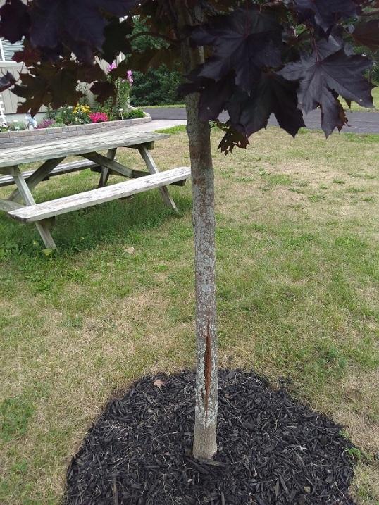 Splits in tree trunks (1)